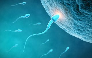 Understanding Fertility and Infertility
