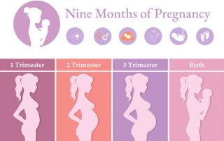 Nine Months of Pregnancy
